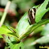 Thumbnail image for Photo of the week: Butterfly in Main Range National Park, Australia