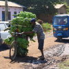 Thumbnail image for Man pushing a bicycle piled up with bananas in Mto wa Mbu, Tanzania