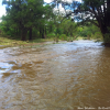 Thumbnail image for Flooded out while camping in Canungra, Australia