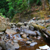 Thumbnail image for Coomera River Crossing in Lamington National Park, Australia