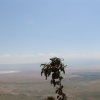 Thumbnail image for Ngorongoro Crater View, Tanzania | Panorama