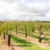 Thumbnail image for Wine tasting in the Barossa Valley and camping at Parham, South Australia