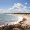 Thumbnail image for Beaches, Bays and Sea Lions on the Eyre Peninsula, South Australia