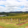 Thumbnail image for Lindemans Winery in the Hunter Valley, Australia