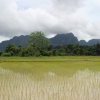 Thumbnail image for Panorama: Freshly Planted Rice Field in Vang Vieng, Laos