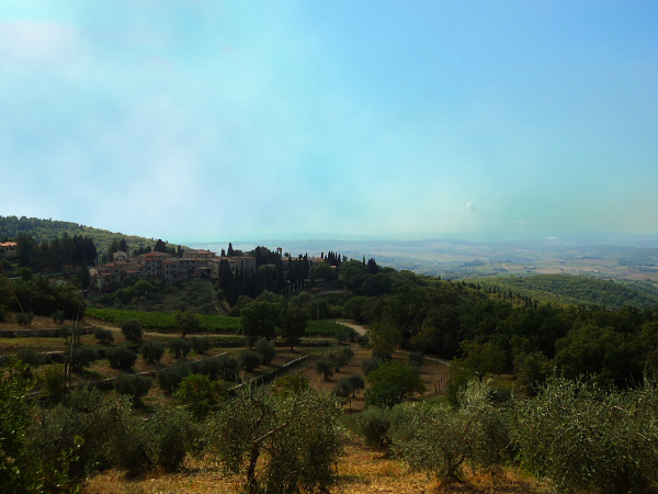 View of olive groves in Chianti, Italy