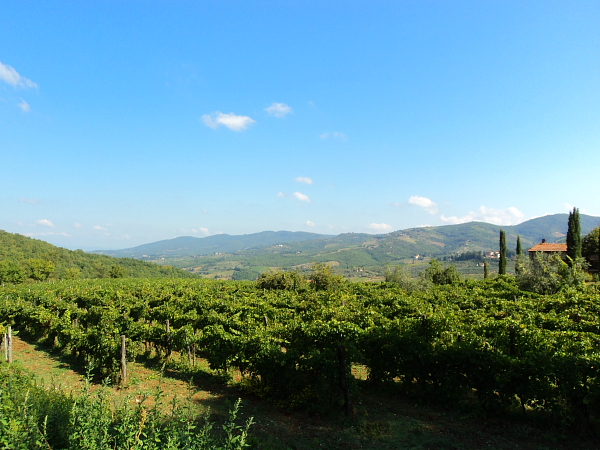 view of a vineyard in Chianti, Italy
