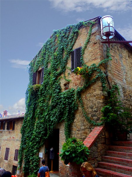 Vine covered house in San Gimignano, Italy
