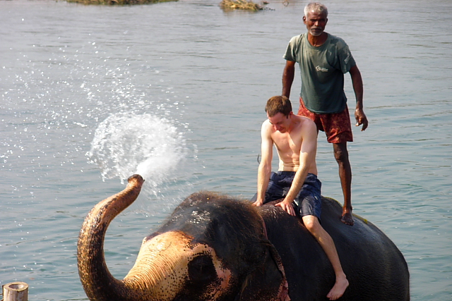 Elephant squirting water in Chitwan National Park, Nepal