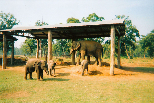 Elephant Breeding Centre in Chitwan National Park, Nepal