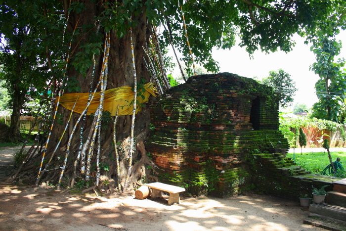 Tree growing over ruins at Wat Chedi Luang in Chiang Saen, Thailand