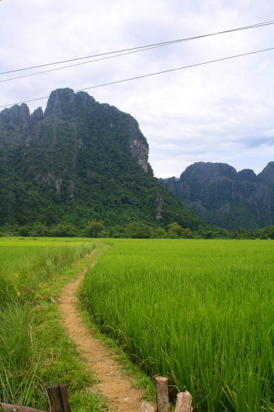 A path running through a rice field in Vang Vieng, Laos