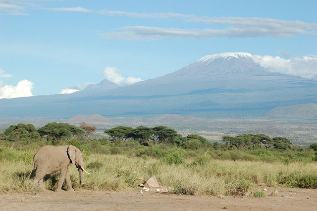 Elephant in front of Mt Kilimanjaro, Tanzania