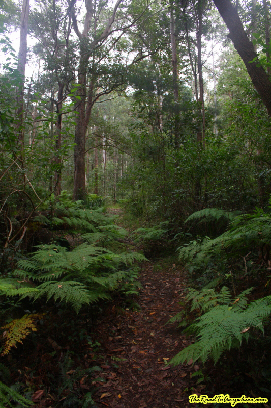 Walking through the forest on Mount Barney, Australia