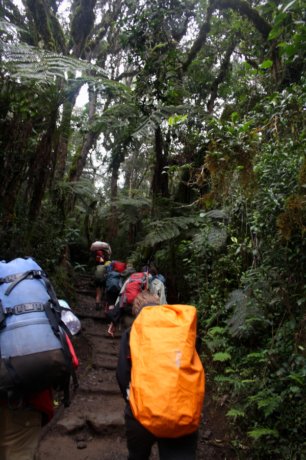 Hiking in the rain forest on Mount Kilimanjaro, Tanzania