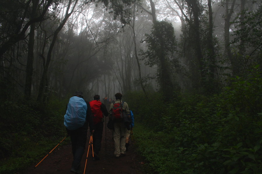 Walking through the rain forest on Mount Kilimanjaro, Tanzania