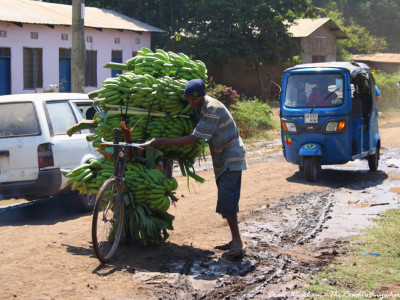 A man pushes a bicycle piled high with bananas in Mto wa Mbu, Tanzania
