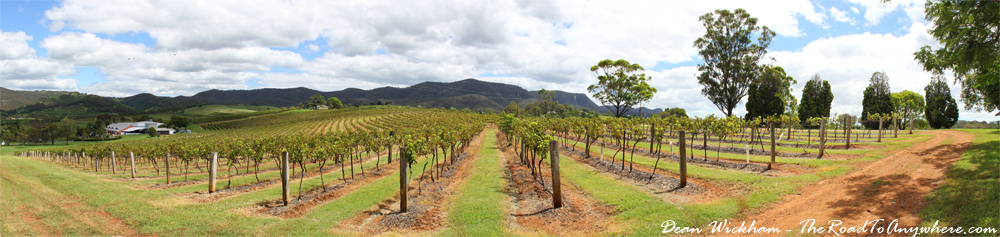 Panorama of a winery in the Hunter Valley, Australia