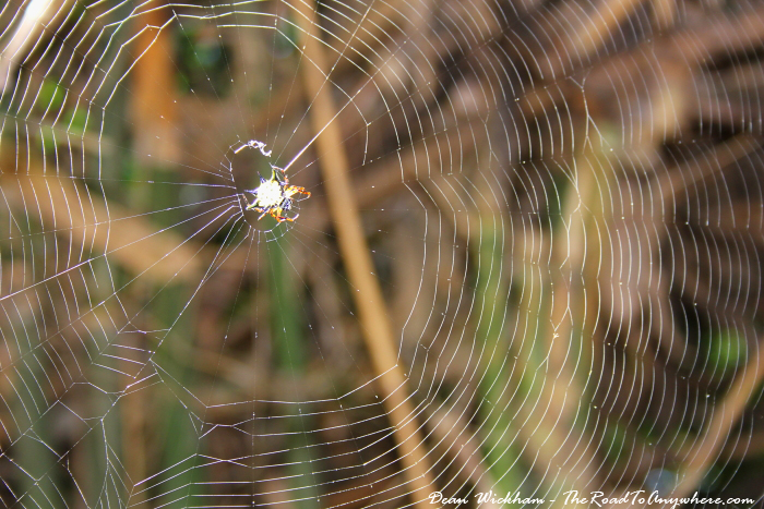 Spider and web in Cat Ba National Park, Vietnam