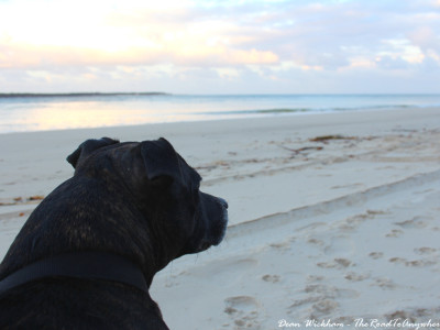 My dog, Mindy, watching the sunset at Inskip Point, Australia
