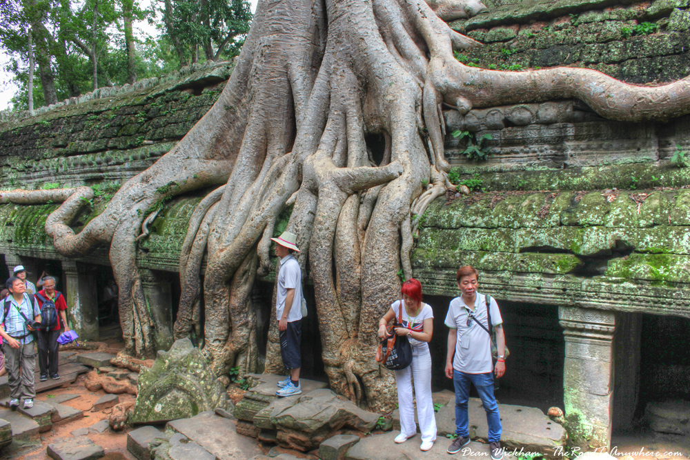 Tree covered ruins at Ta Phrom, Temples of Angkor, Cambodia
