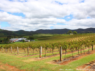 Lindemans Winery in the Hunter Valley, Australia