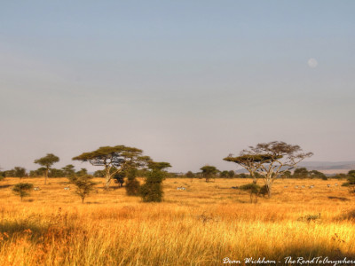 Morning view of the Serengeti Plain in Tanzania