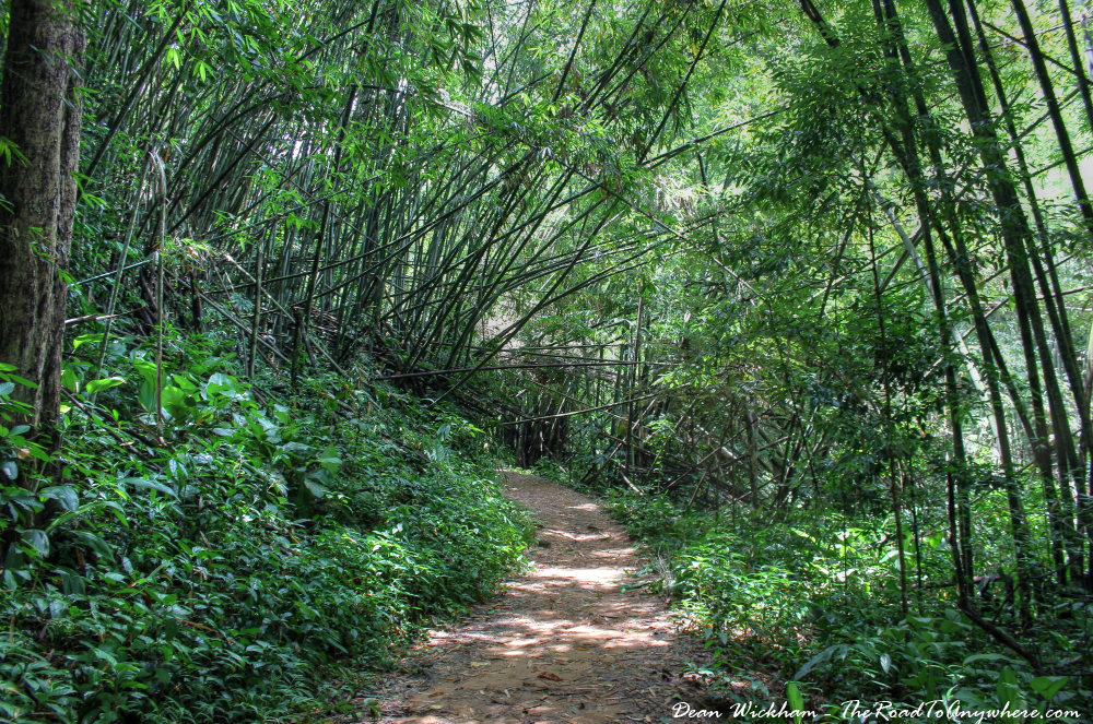 Hiking amongst bamboo in Northern Thailand