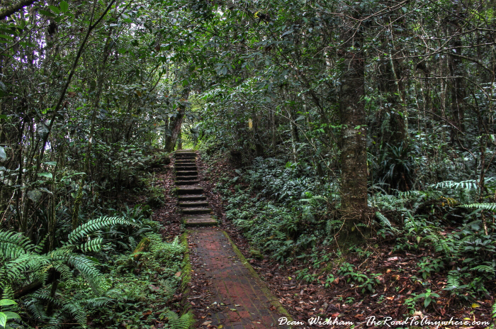 Paved pathway through the forest in the Cameron Highlands, Malaysia