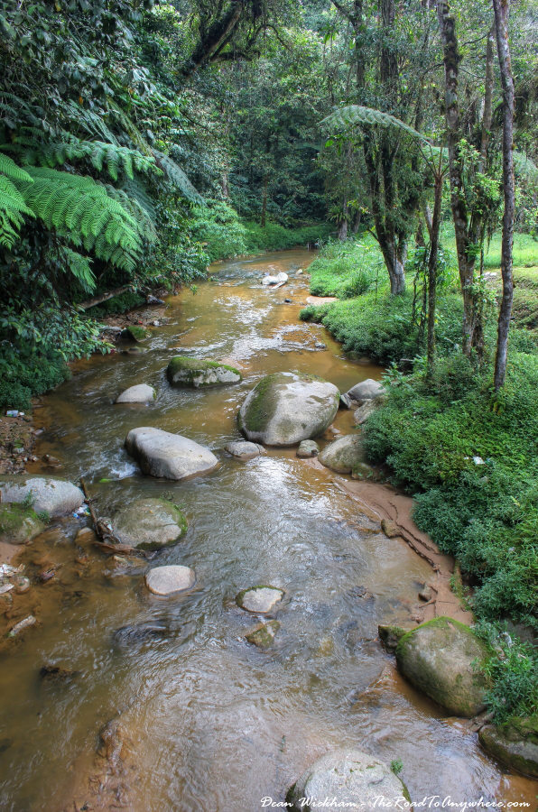Rainforest stream in the Cameron Highlands, Malaysia