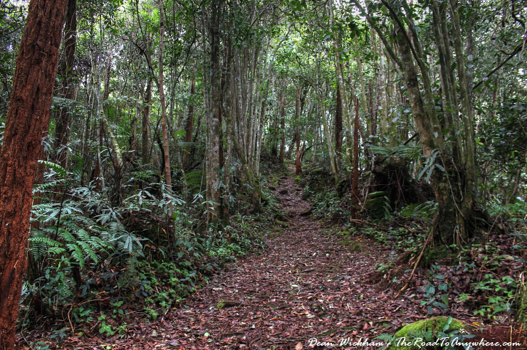 Rainforest trail in the Cameron Highlands, Malaysia