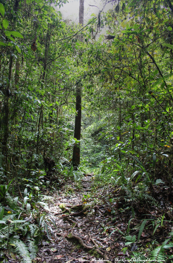 Rough trail through the forest in the Cameron Highlands, Malaysia