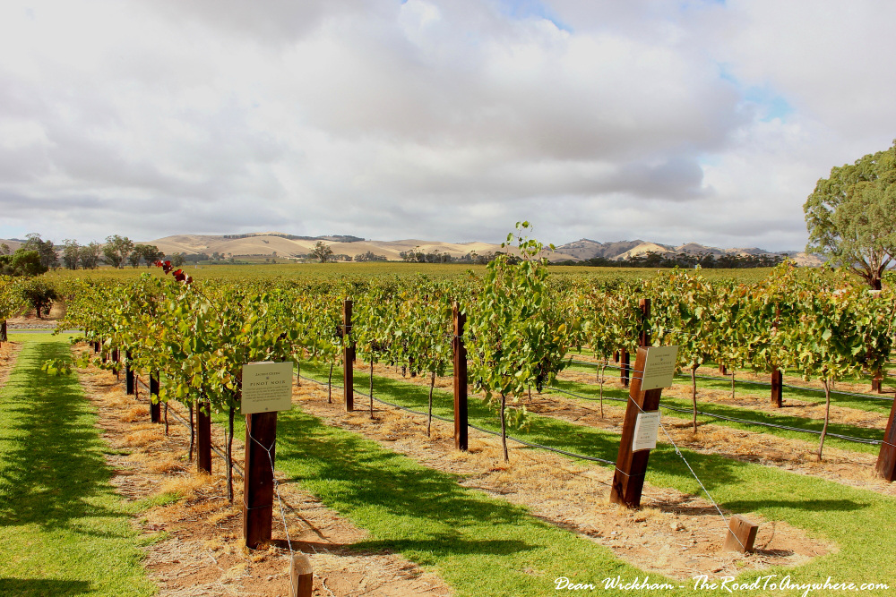 Vineyard at Jacob's Creek in the Barossa Valley, South Australia