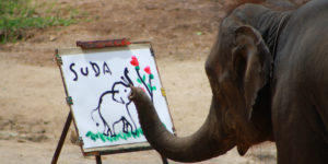 An elephant painting a picture in Chiang Mai, Thailand
